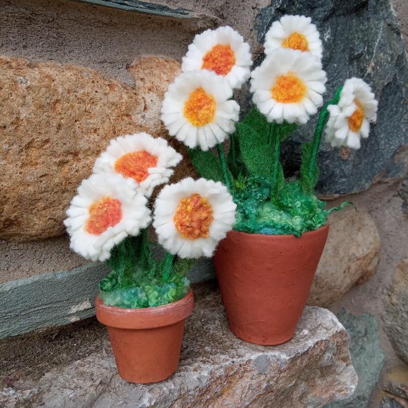 Mini white daisy pot (three flowers)