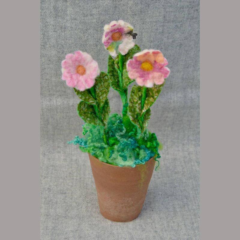 Daisy Pots (white & pink flower)